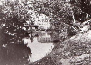 Segura río cañas